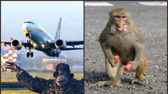 AHEMMADABHAD, MONKEY, AIRPORT